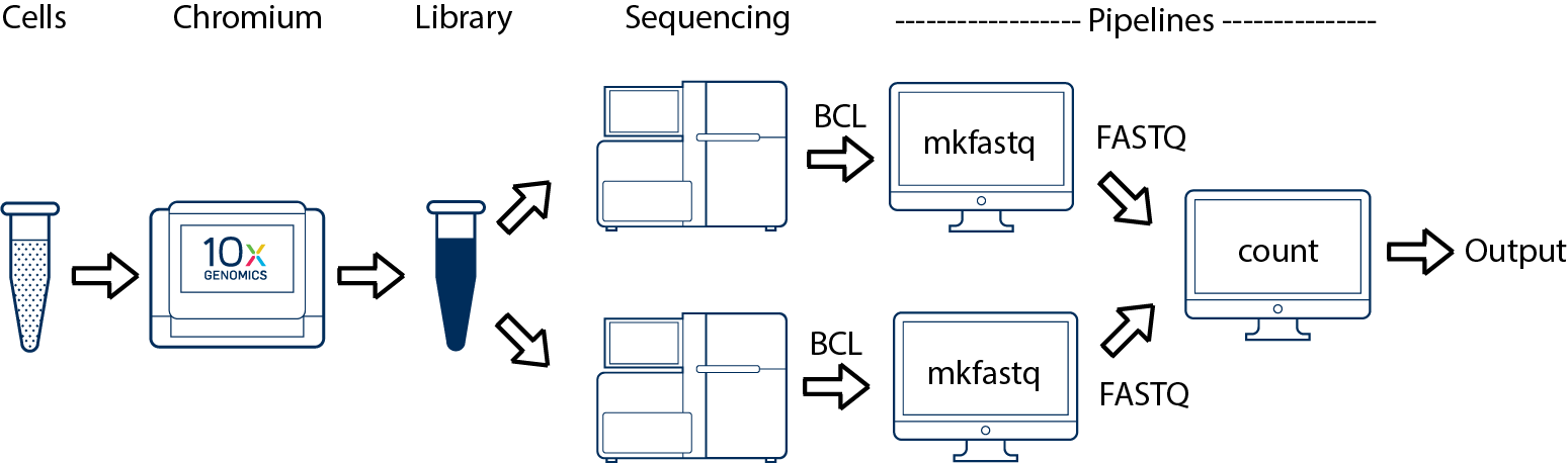 cellranger multiple sequencing runs